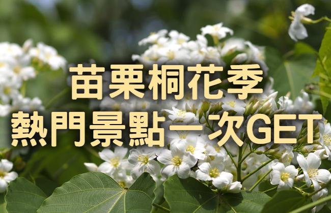 【桐花季】四月雪舞桐樂會 苗栗銅鑼勝興賞桐一日(MAL33)
