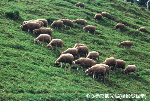 【南投三天兩夜】星空湖景 日月潭清境農場三日遊(NTO37)