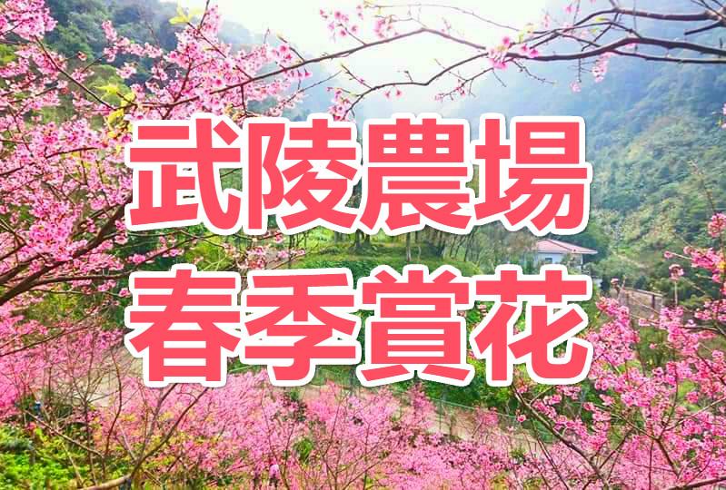 🌸【櫻花季】初櫻相遇春風裡 武陵農場一日遊(TCH72)