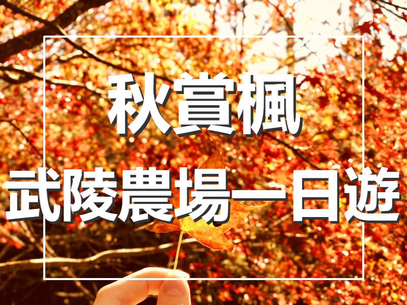 🍁【秋賞楓】2020武陵好楓光一日遊(TCH70)