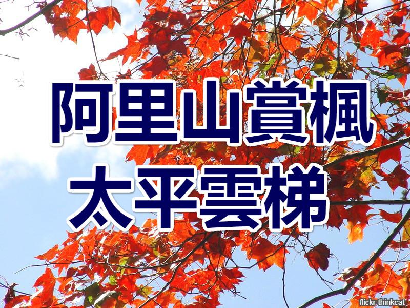 🍁【秋賞楓】楓雲再起  阿里山太平雲梯一日遊(CHY13)