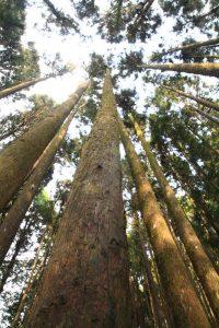 阿里山森林園區