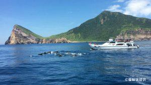 大量鯨豚圍繞在船隻旁