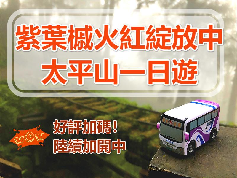 🔥【紫葉紅了】2020太平山紫葉槭一日遊 (ILN70)