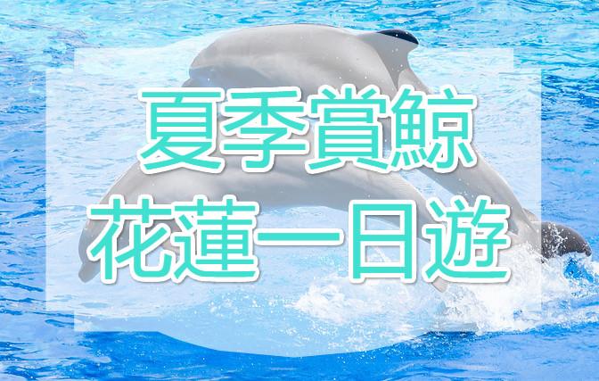 【花蓮賞鯨】鯨豔盛夏 花蓮賞鯨一日遊(HUN05)