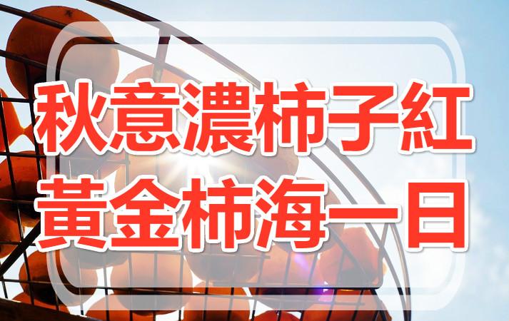 【美食之秋】柿子紅了 情深柿海九降風一日遊(HSH06)