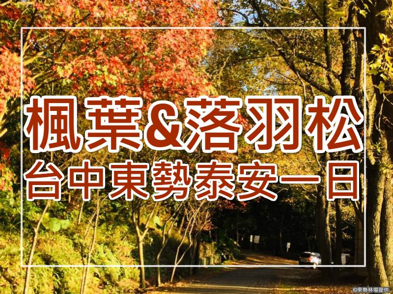 🍁【秋賞楓落羽松】呼楓喚羽 台中東勢泰安一日遊(TCH04)