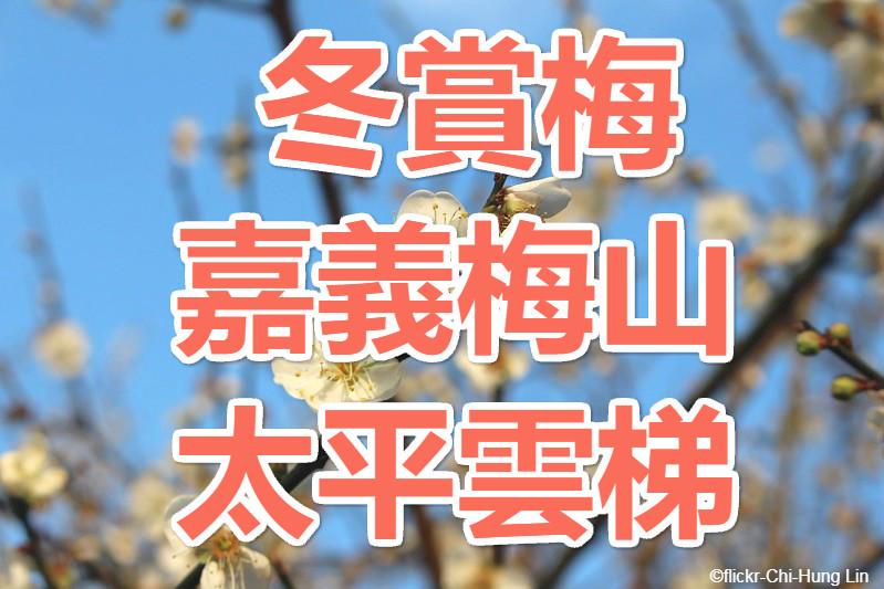 【冬賞梅】梅好風光 嘉義梅山太平雲梯一日(CHY17)