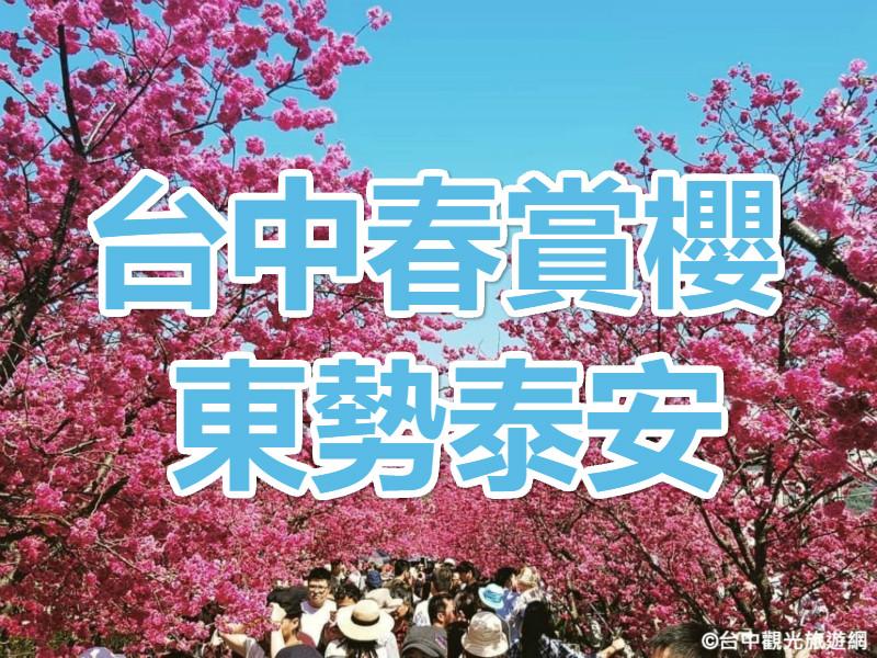 🌸【櫻花季】櫻為有你花現愛 台中東勢泰安一日遊(TCH07)