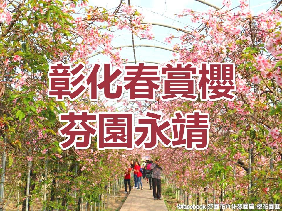 🌸【櫻花季】有緣櫻起春遊趣  彰化芬園永靖一日遊(CWH08)
