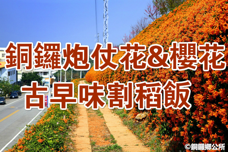 🌸【櫻花季】春櫻嬉遊好陶氣 銅鑼櫻花華陶窯古早味一日(MAL12)