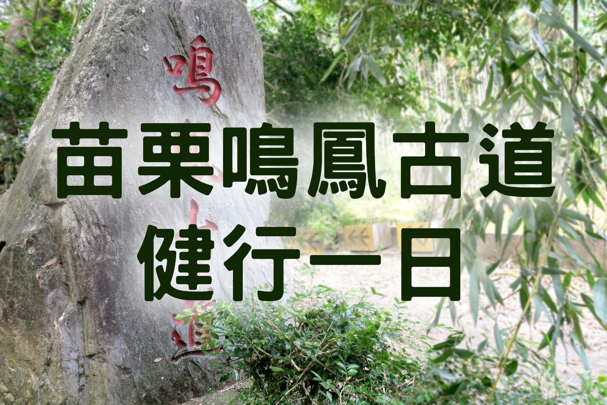 【桐花季】雪桐飄香鳴鳳飛 苗栗獅潭健行一日(MAL14)