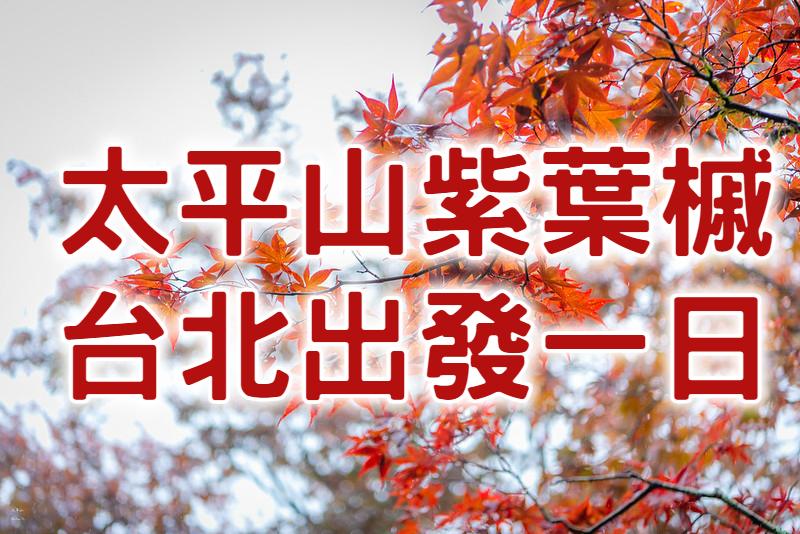 🍁【太平山紅葉】森愛太平紫葉槭 宜蘭太平山一日遊 (ILN70)