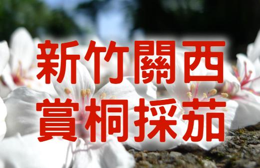 【桐花季】茄對好桐有關西 新竹馬武督賞桐一日遊 (HSH07)