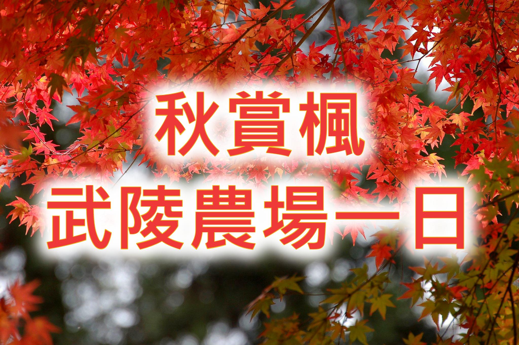 🍁【漫天紅葉】2021秋楓起 武陵農場一日遊(TCH70)
