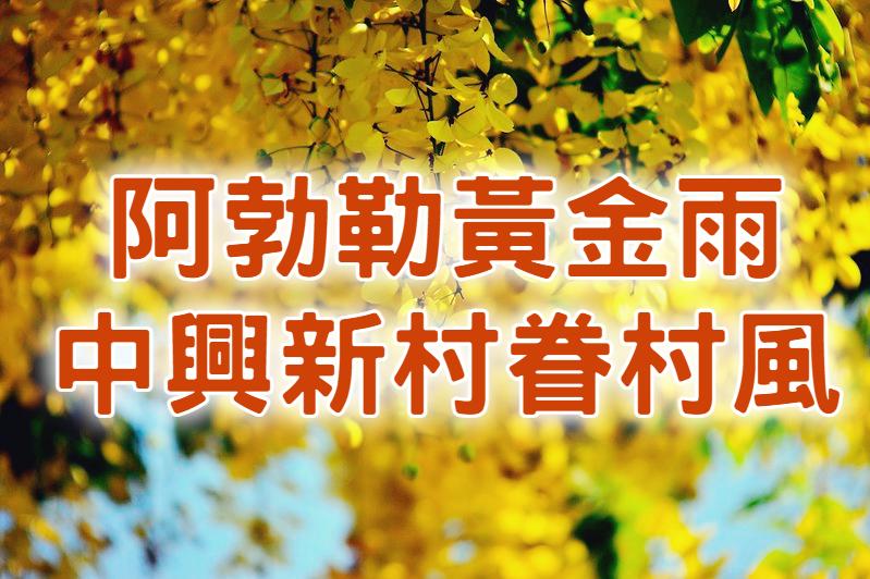 💛【阿勃勒花季】小鎮浪漫黃金雨 南投中興阿勃勒一日遊 (NTO54)