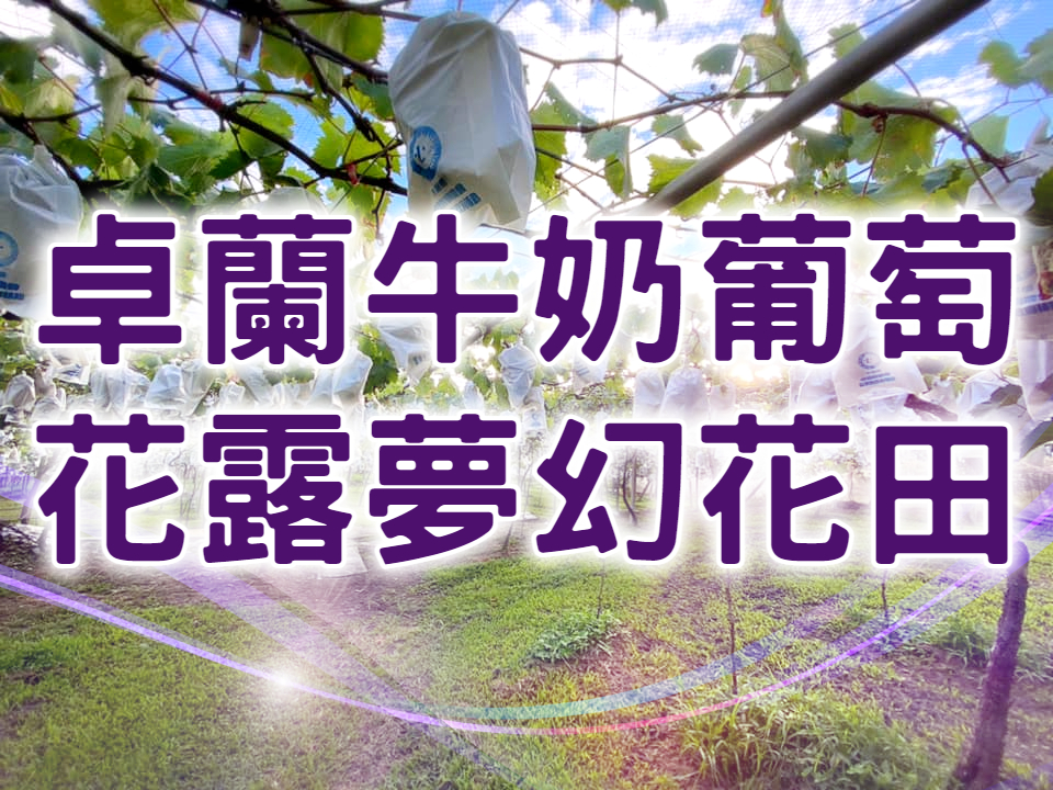 🍇【夏季賞花採果】浪漫花田鮮果甜 苗栗卓蘭採果一日遊 (MAL16)