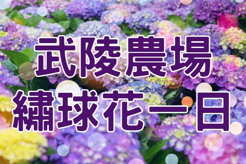 💙【繡球花季】初夏花語紫陽夢 武陵農場繡球花一日遊 (TCH72)