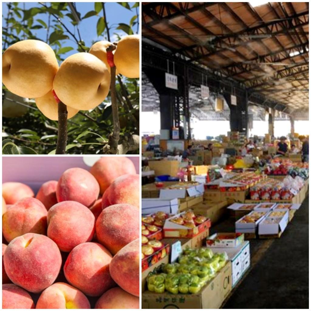 14:00~14:40【東勢果菜市場】東勢區是全臺最大的高接梨產地,素有「水果之鄉」的稱號,大量栽培柑桔、高接梨、甜柿、桃、李、葡萄等豐富水果,您可在此購買到新鮮優惠的在地質送鮮果(※販售品項及價格皆依現場商家提供為準,購買水果農產品等費用自理)
