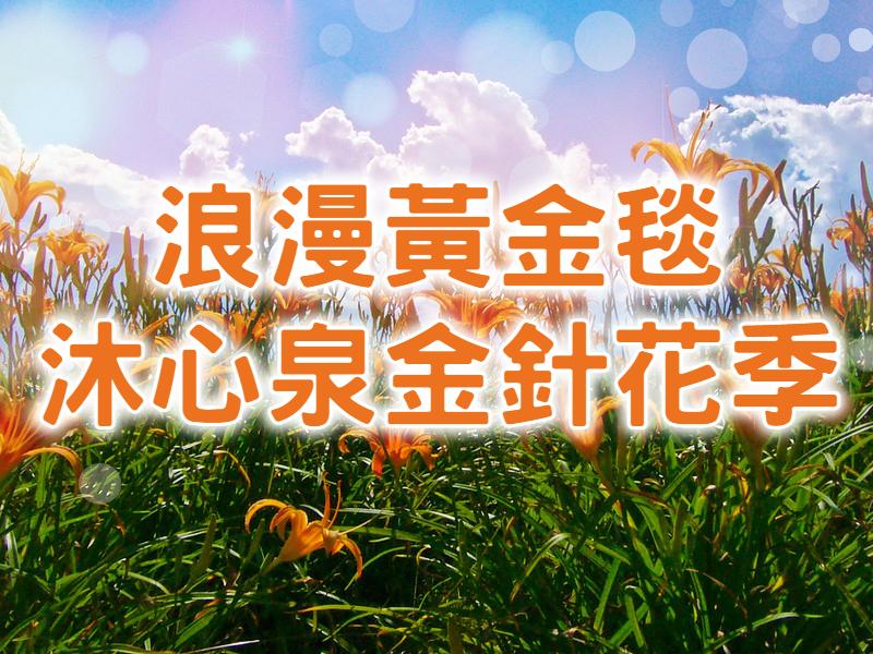 💛【2021金針花季】初夏黃金忘憂草 台中東勢新社金針一日遊 (TCH13)
