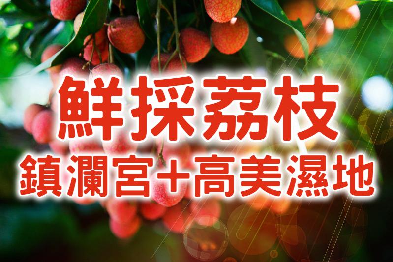【荔枝採果】愛的魔荔轉圈圈 台中採果風情一日遊 (TCH12)