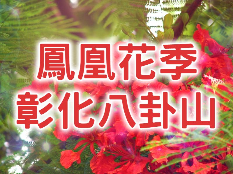 ❤️【鳳凰花季】鳳凰花開火熱的愛 彰化八卦山一日遊 (CWH13)