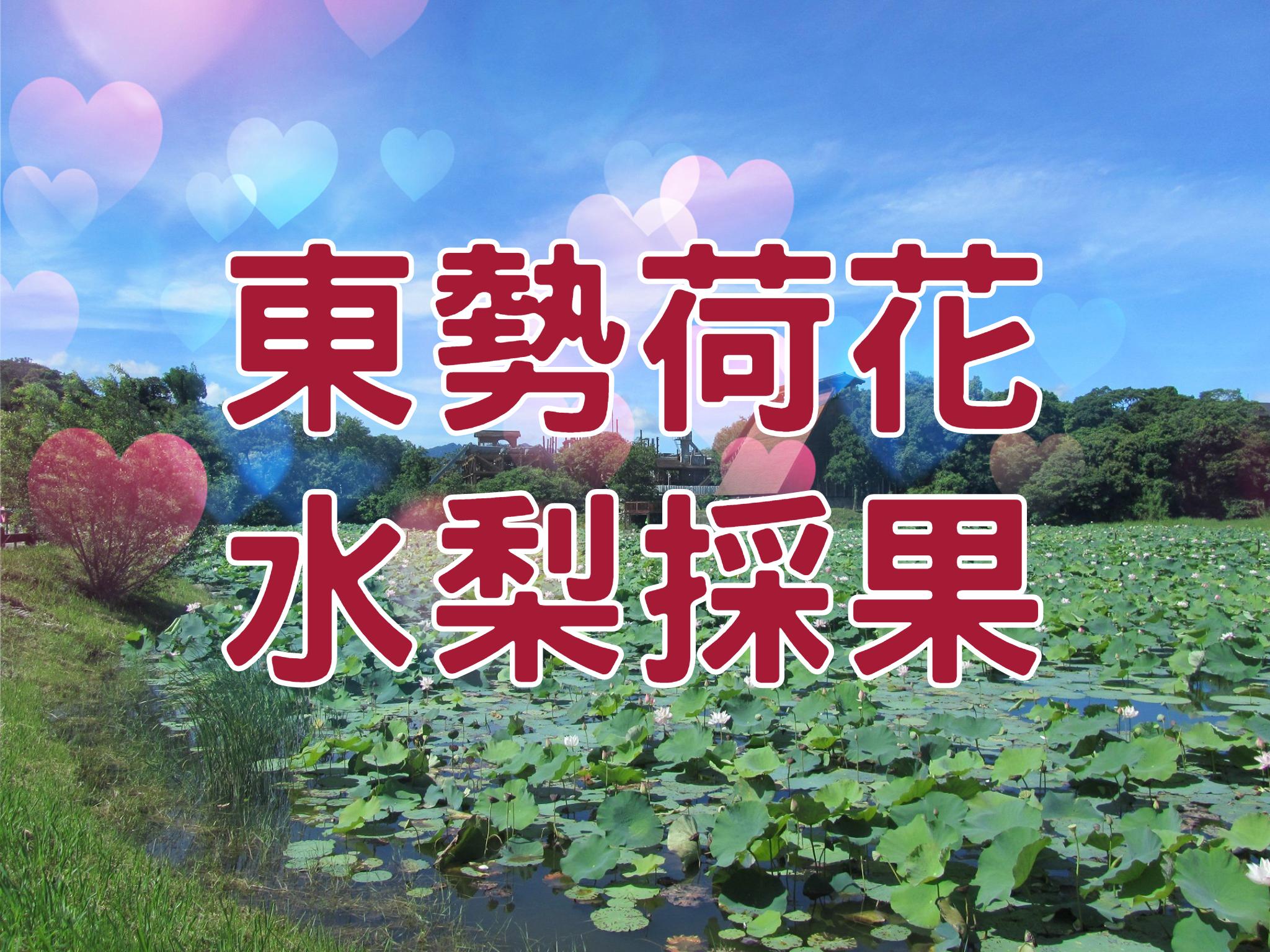 🍐【賞荷+採果】荷你梨一夏 台中東勢一日遊 (TCH14)