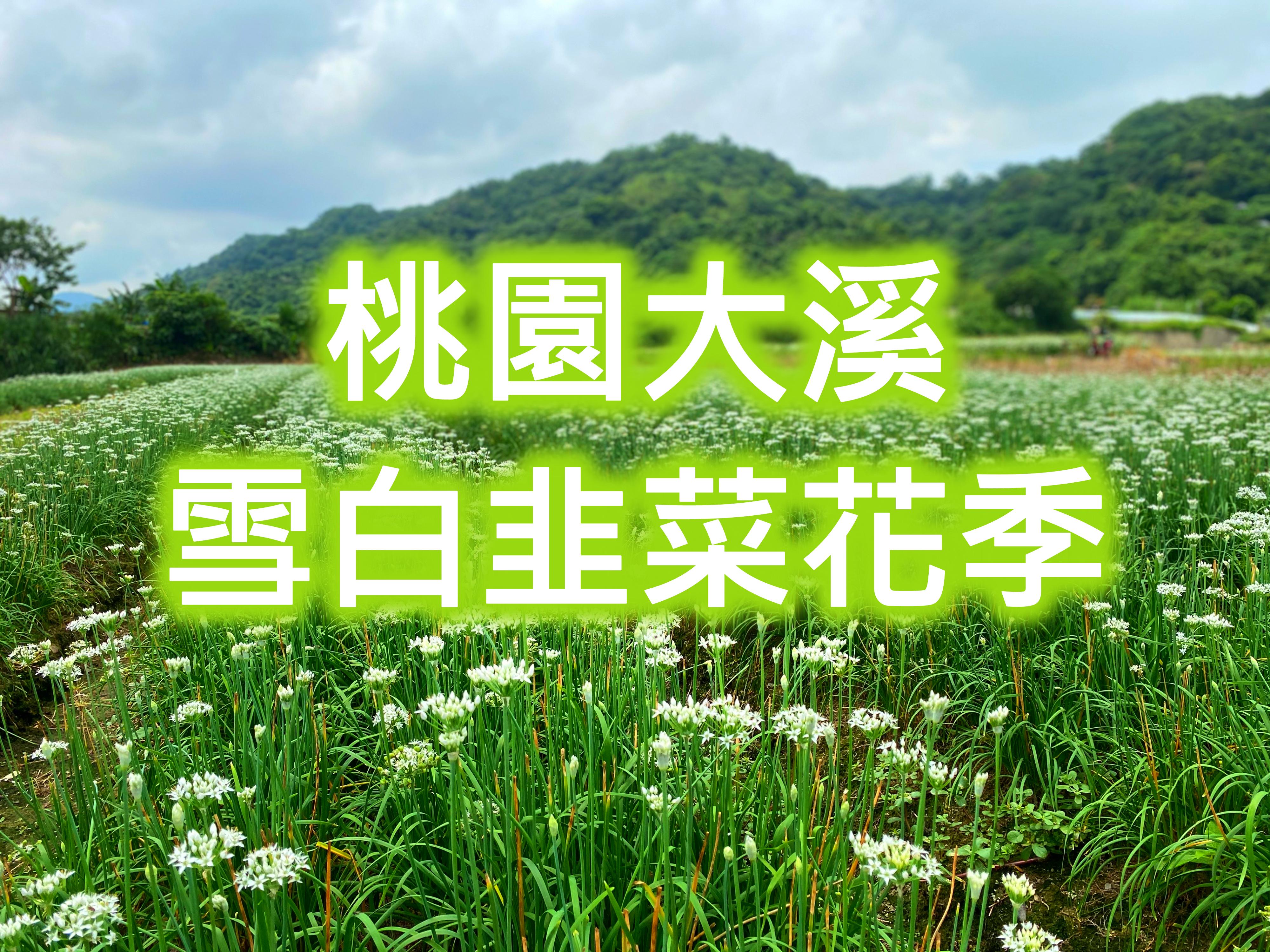 🤍【韭菜花季】浪漫韭月雪之戀 桃園滿月圓花田一日遊(TYU07)